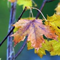 осень :: slava