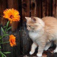 Ой! Эти цветы для меня? :: Люба