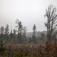 Туман :: Ольга Милованова