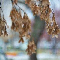 Когда уже опали листья с клёнов.... :: Михаил Полыгалов