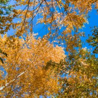 Осенний пейзаж :: Cтанислав Анатольевич Курбатов