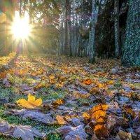переход осень-зима :: Георгий А