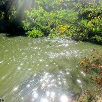 Солнечные блики на речной воде :: Нина Бутко
