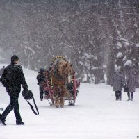 Зима в Павловске :: vadim