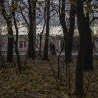 Прозрачный лес :: Александра