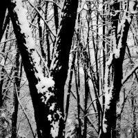 Графика зимы. :: Андрий Майковский