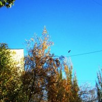 Солнечным днём :: Самохвалова Зинаида