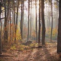 В осеннем лесу :: София