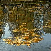 Листья на воде1 :: Алексей Виноградов