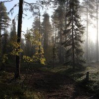 В лесу :: Николай Капранов