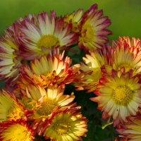 Цветы Ноября :: Ty Gh .