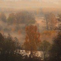 Истра, золотая, туманная осень :: Евгений (bugay) Суетинов