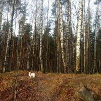 Первый день ноября. Прогулка в лесопарке :: Елена Павлова (Смолова)