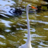 Белая птица. :: оля san-alondra