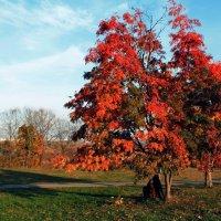 Я не хочу с тобой прощаться, о Осень, дивная пора... :: Vera Ostroumova