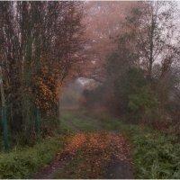 Туманное утро :: Александр Максимов