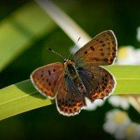 опять про бабочек...3 :: Александр Прокудин