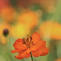 солнечный цветочек :: НАТАЛЬЯ