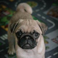 Злая собака. :: Евгения Кирильченко