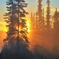 Восход солнца в тайге :: Сергей Чиняев