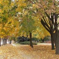 Осень желто-зеленая :: super-krokus.tur ( Наталья )