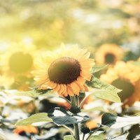 Немного солнца.. :: Лилия .