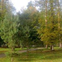 В городском парке :: Елена Семигина