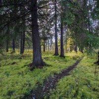 Лесной мотив :: Павел