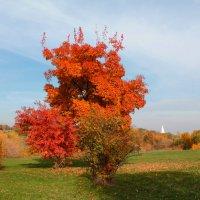 Осень. Сказочный чертог :: Vera Ostroumova