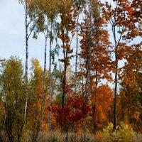 Краски осеннего леса :: san05 -  Александр Савицкий
