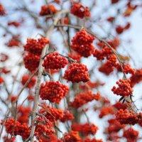 осени красная краса 4 :: Александр Прокудин