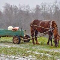 Рабочая лошадка :: Olcen Len