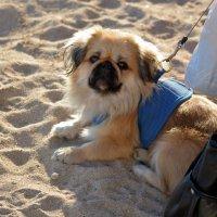 Отдых на пляже :: Ольга (crim41evp)