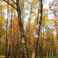 Золотой октябрь :: Ирина Via