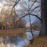 Старый тополь у маленькой реки :: Любовь Потеряхина