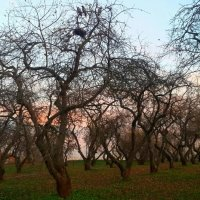 Яблоневый сад...обнаженная осень... :: Вера