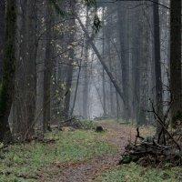 лес, тропа и туман :: Владимир Гараган