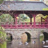 Японский парк :: Noa