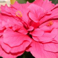 аленький цветочек :: Sabina