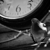 Часы не с кукушкой :: Вадим