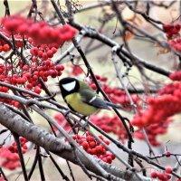Покормите птиц зимой. :: Венера Чуйкова