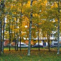 Прогулка по осеннему городу (79) :: Виталий