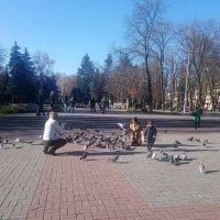 Солнечный ноябрьский день :: Ольга Винницкая (Olenka)