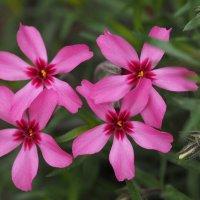 Весенние цветы :: Евгений Седов