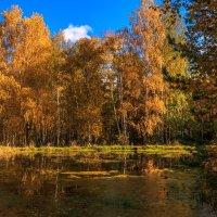 лесной прудик :: Василий Иваненко