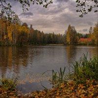 Листья и капли дождя на воде :: Владимир Макаров
