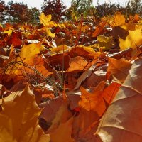 Золотистая грусть - танго листьев опавших. :: Liliya Kharlamova