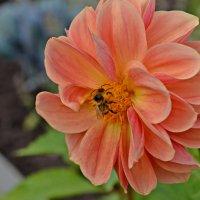 Сбор нектара :: Ната57 Наталья Мамедова
