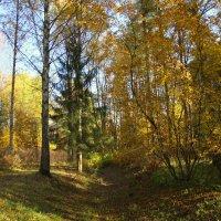 Осенний лес :: Валентина
