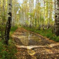 В роще белой догорает осень... :: Нэля Лысенко
